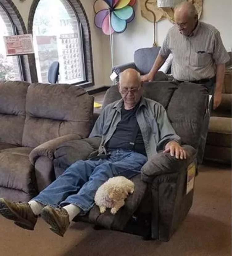Cane Coco nella poltrona con il proprietario
