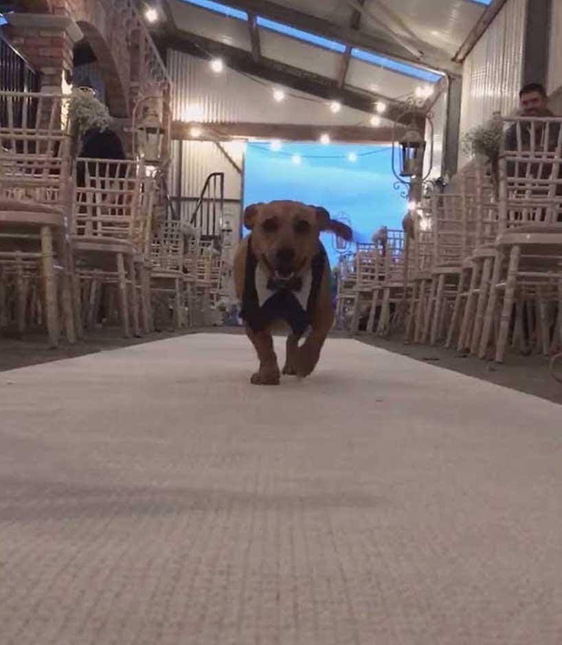 8 cani disabili partecipano al matrimonio dei proprietari: il video