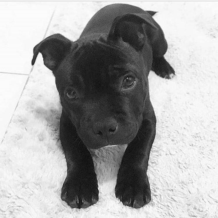 Palermo: cucciolo di cane preso a calci perde la vita