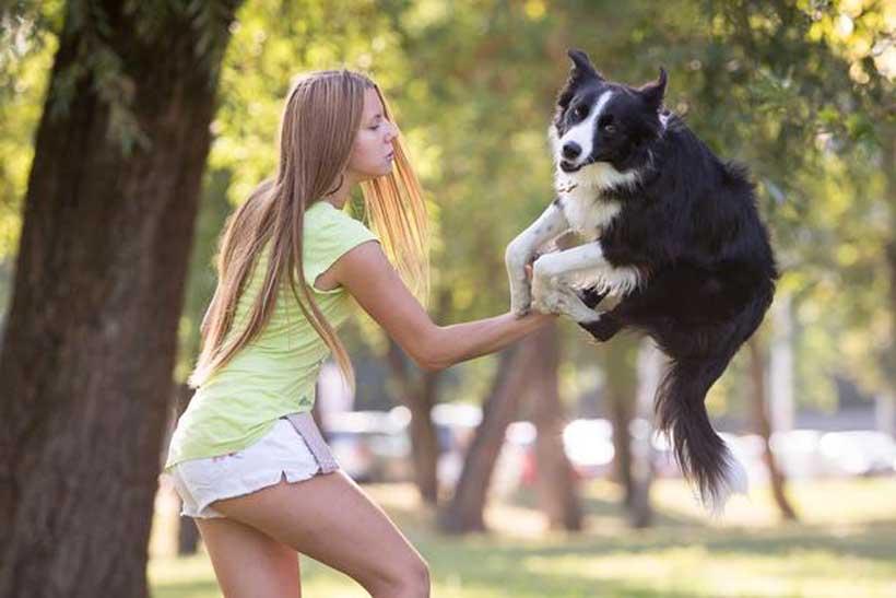 Kasia, il cane più intelligente del mondo: il video