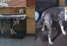 Cane chiuso in gabbia Torino