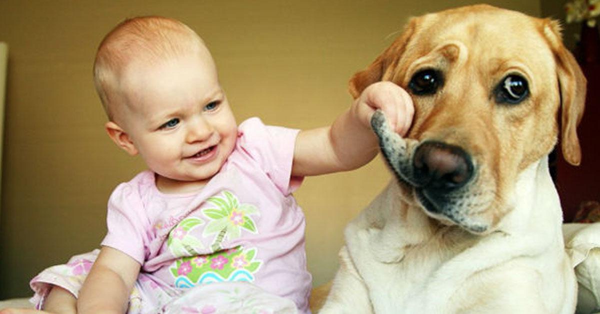 insegnare al cane a stare lontano da un bambino
