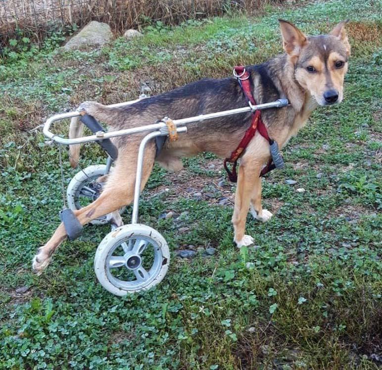 Cane con un carrellino