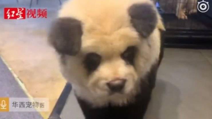 Cane dipinto da Panda