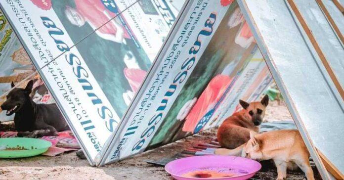 Cani-con-un-rifugio-improvvisato