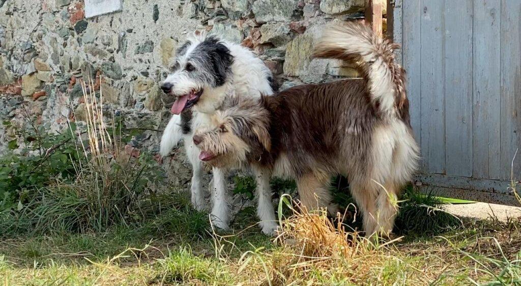 Cani del Dog Ranch di Sassello