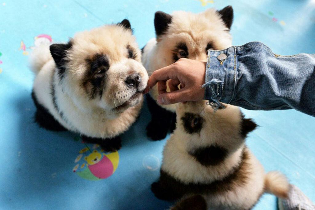 Cani dipinti da Panda