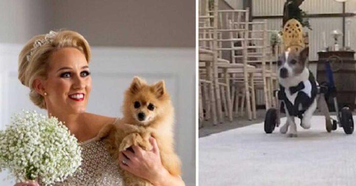 Cani disabili matrimonio