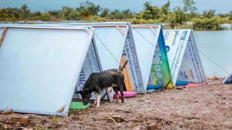 I cani sopravvissuti all'alluvione in Thailandia aiutati da un uomo speciale