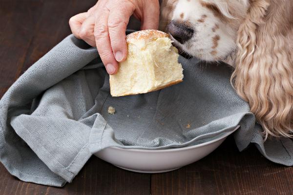 Cani e pane a lievitazione naturale