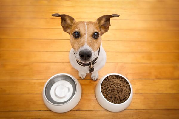 Cani e semi di lino: possono mangiarli? E come?