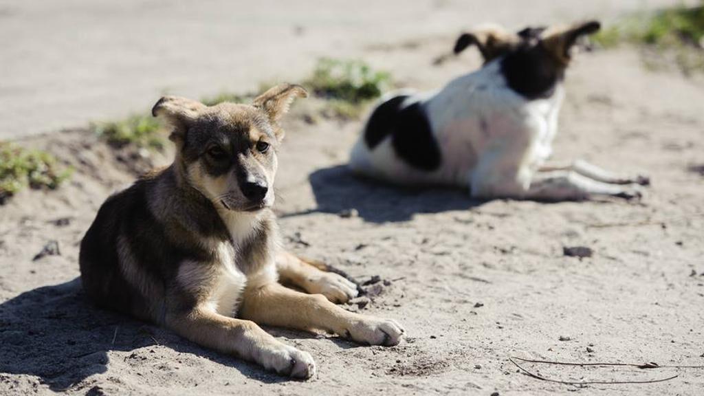 Cani sdraiati al sole
