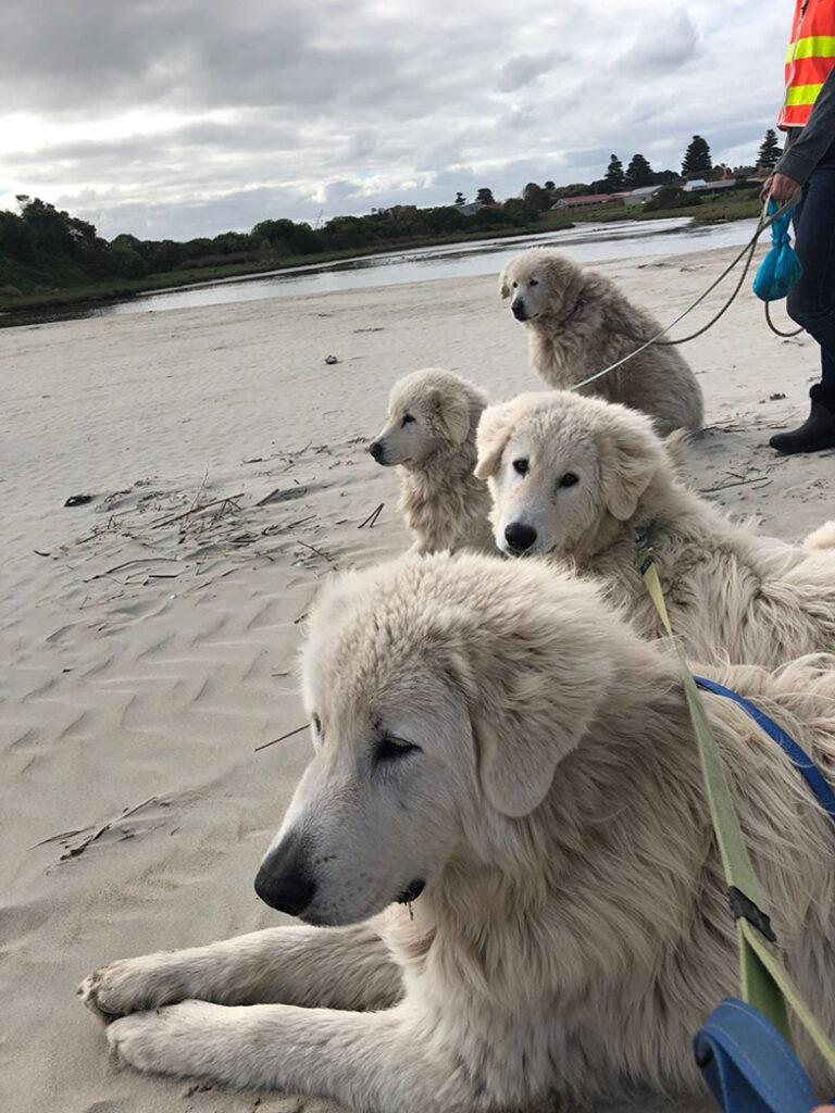 Cani su una spiaggia