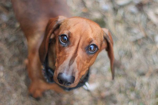 Come insegnare a un cane a capire le parole che dici
