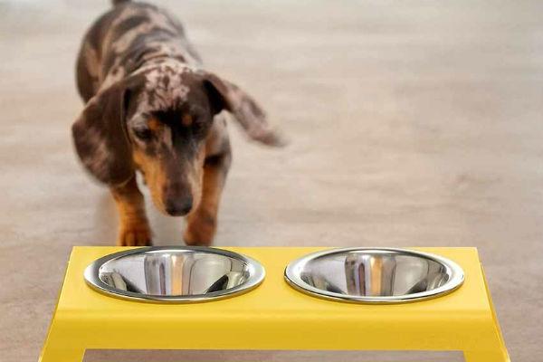 Come insegnare al cane a non capovolgere