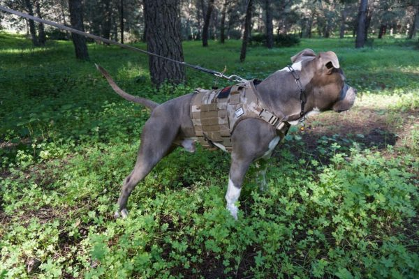 Come scegliere la pettorina del cane