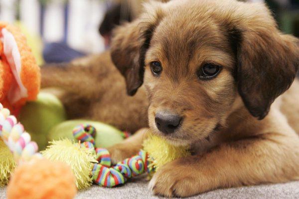 cani e giochi