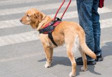 sicurezza cane