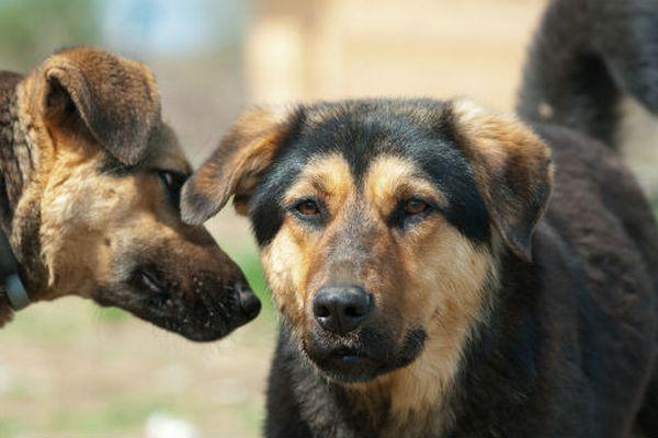 Cose da insegnare subito al cane per l'addestramento perfetto