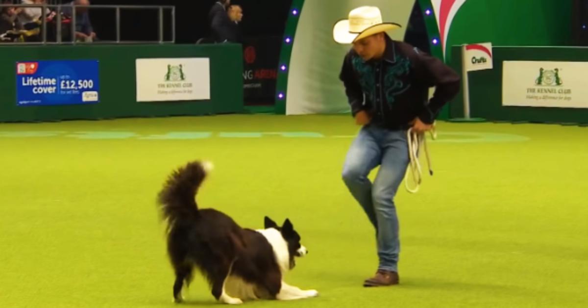 Insegnare al cane a danzare