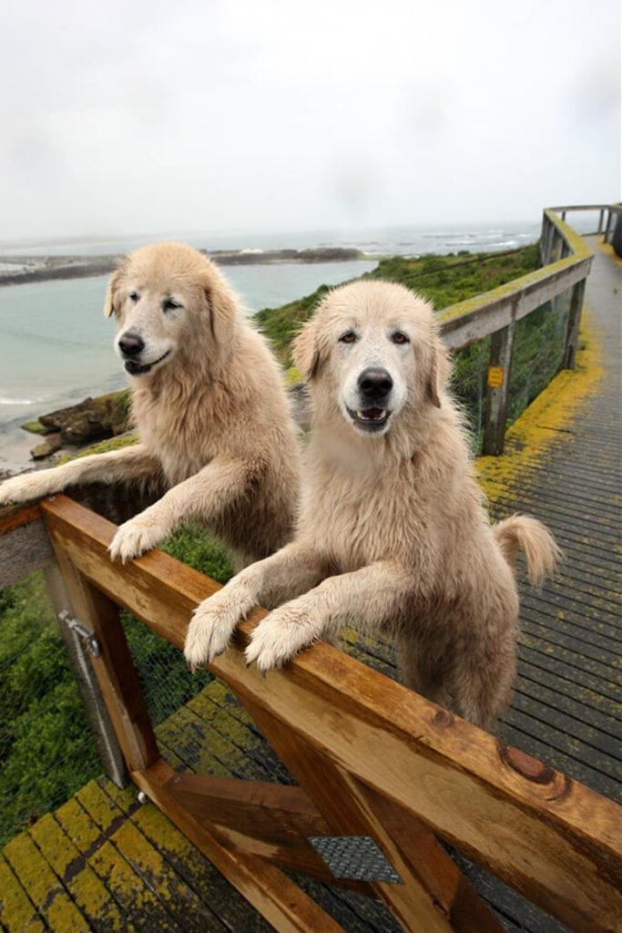 Due cani in piedi