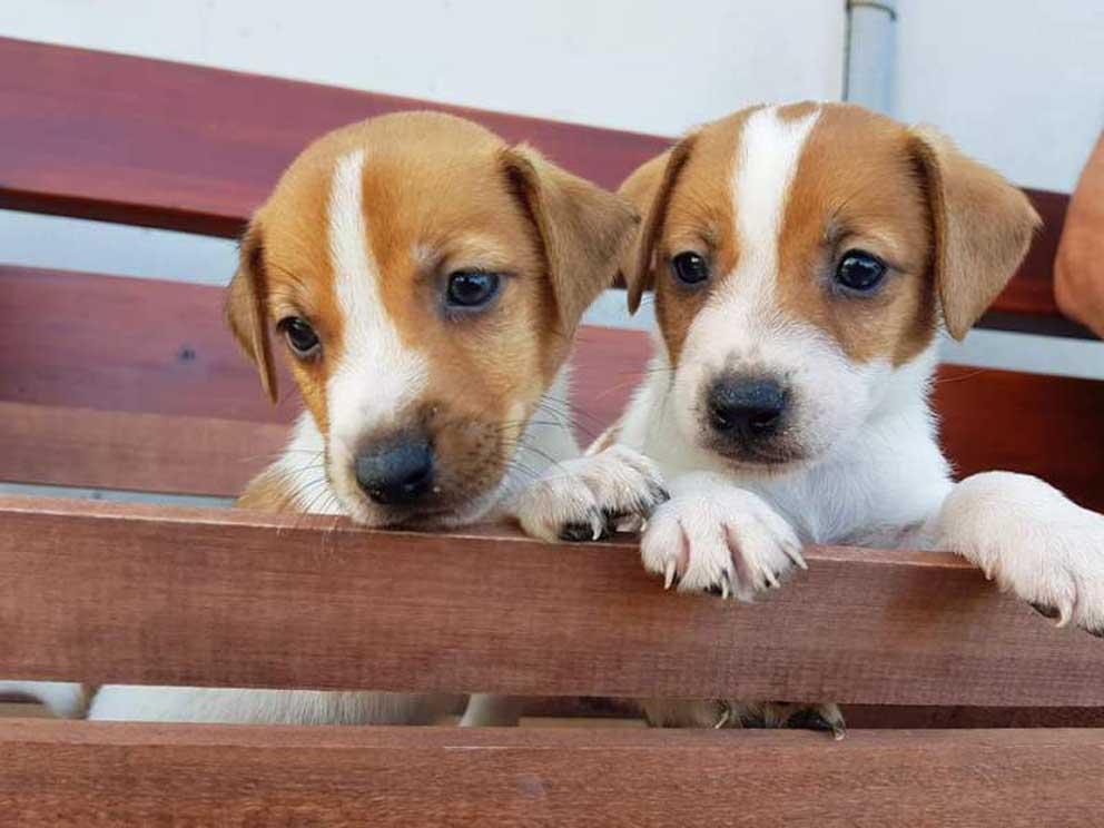 Due cuccioli di cane