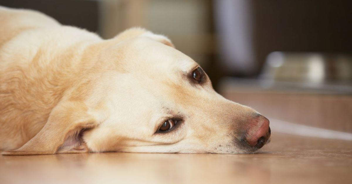 emergenza canina