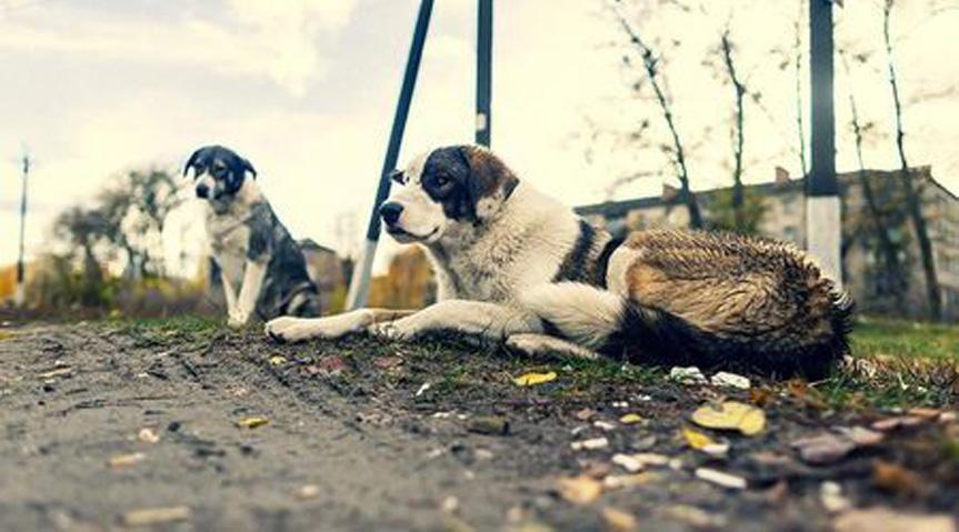 I-cani-di-chernobyl