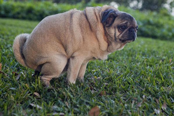Il cane fa la cacca con il muco? Tutto ciò che bisogna fare