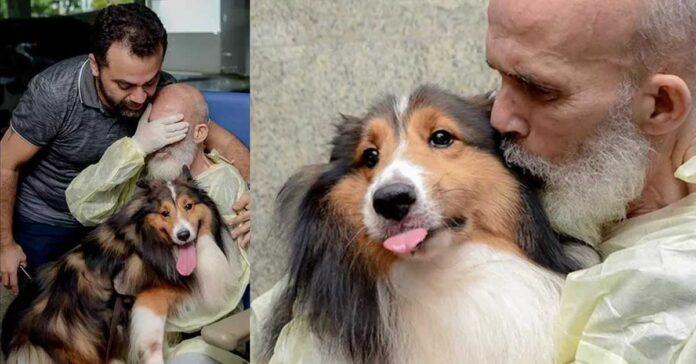 La storia del cane Agadir
