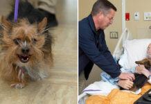 La storia del cane Patch