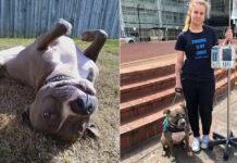 La-storia-del-cane-Ruby (1)