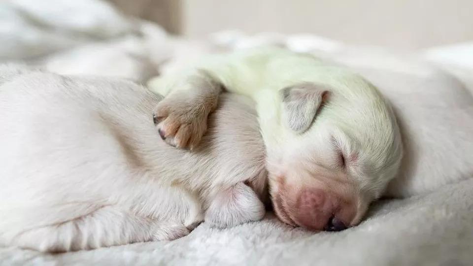 Mojito-cane-cucciolo