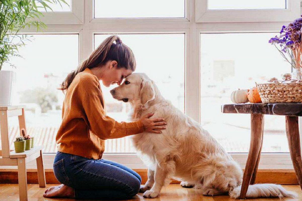 cane e ragazza testa contro testa
