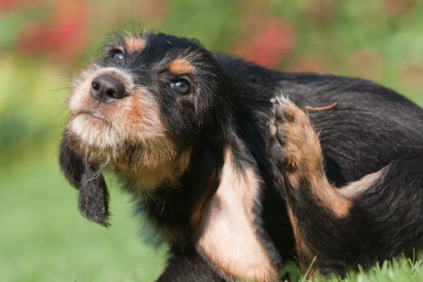 Profender per cani: dosaggio, cos'è, come e quando si usa