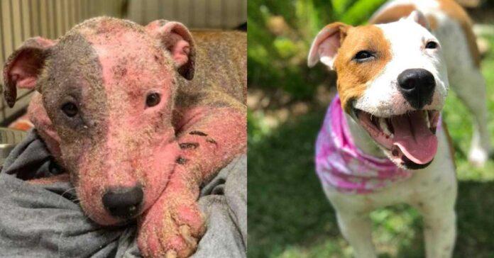 Trasformazione del cane Leialoha