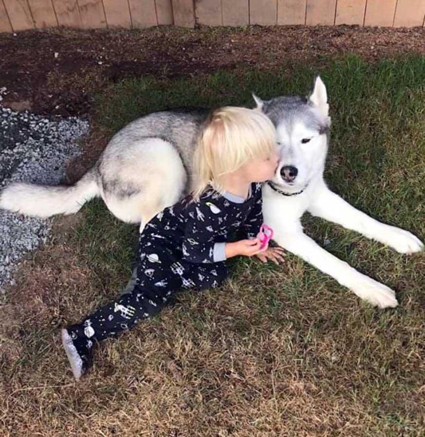Dude, il cane che aiuta una bambina a combattere i problemi derivanti dall'epilessia