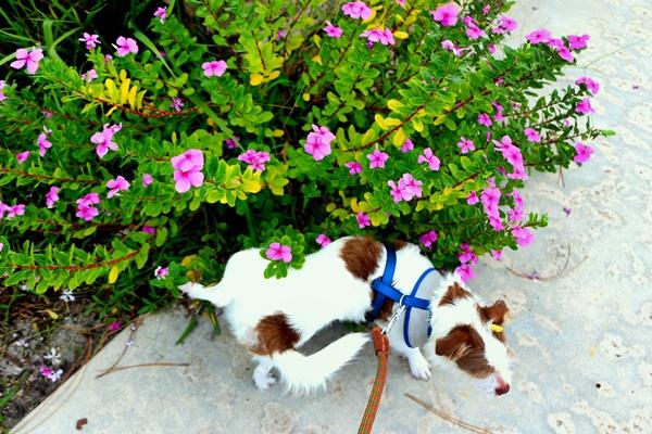 cane con i fiori