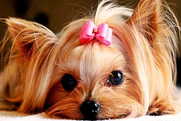 piccolo-cane-che-guarda