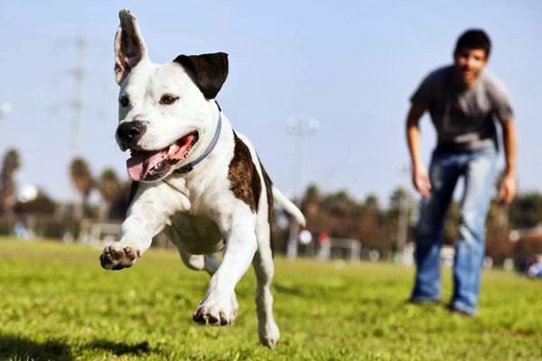 cane che corre al parco