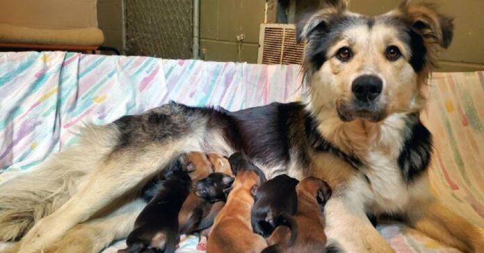 cane e cuccioli