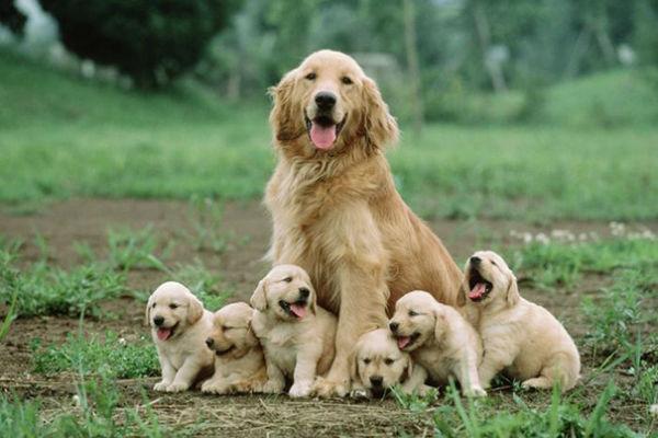 Alimentazione per mamma cane: quali sono le dritte giuste