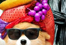 cane spiritoso con gli occhiali da sole