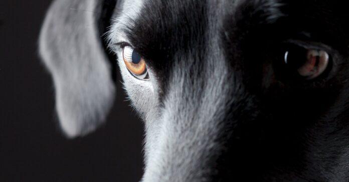 le tenie del cane