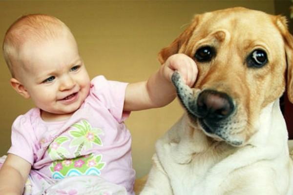 cane con il pelo tirato da una bimba