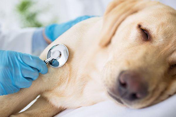 avvelenamentoda insetticidi nel cane,