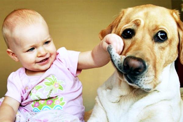 bambina che gioca con il cane