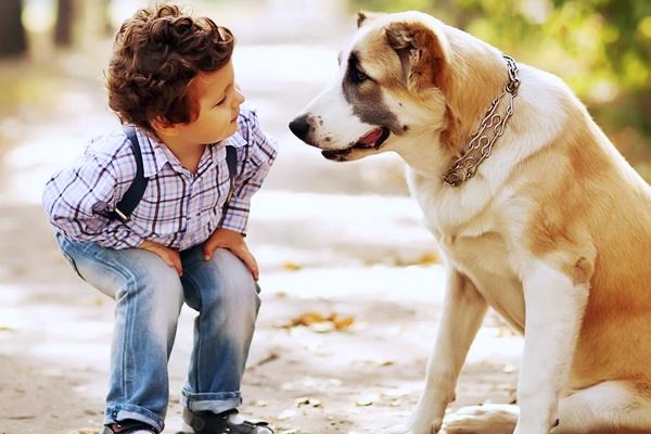bambino guarda un cane grande