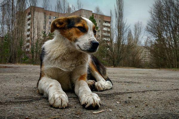 cane di campagna