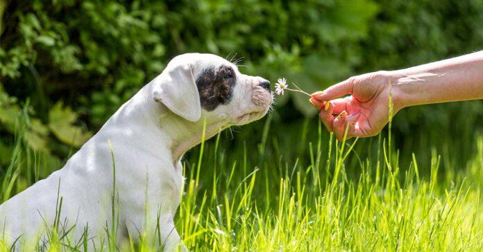coniglio con cane